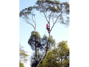 Trimming Eucalyptus 5b1caf5b-aa15-4dd6-a011-41010f40d5b4_image_jpeg